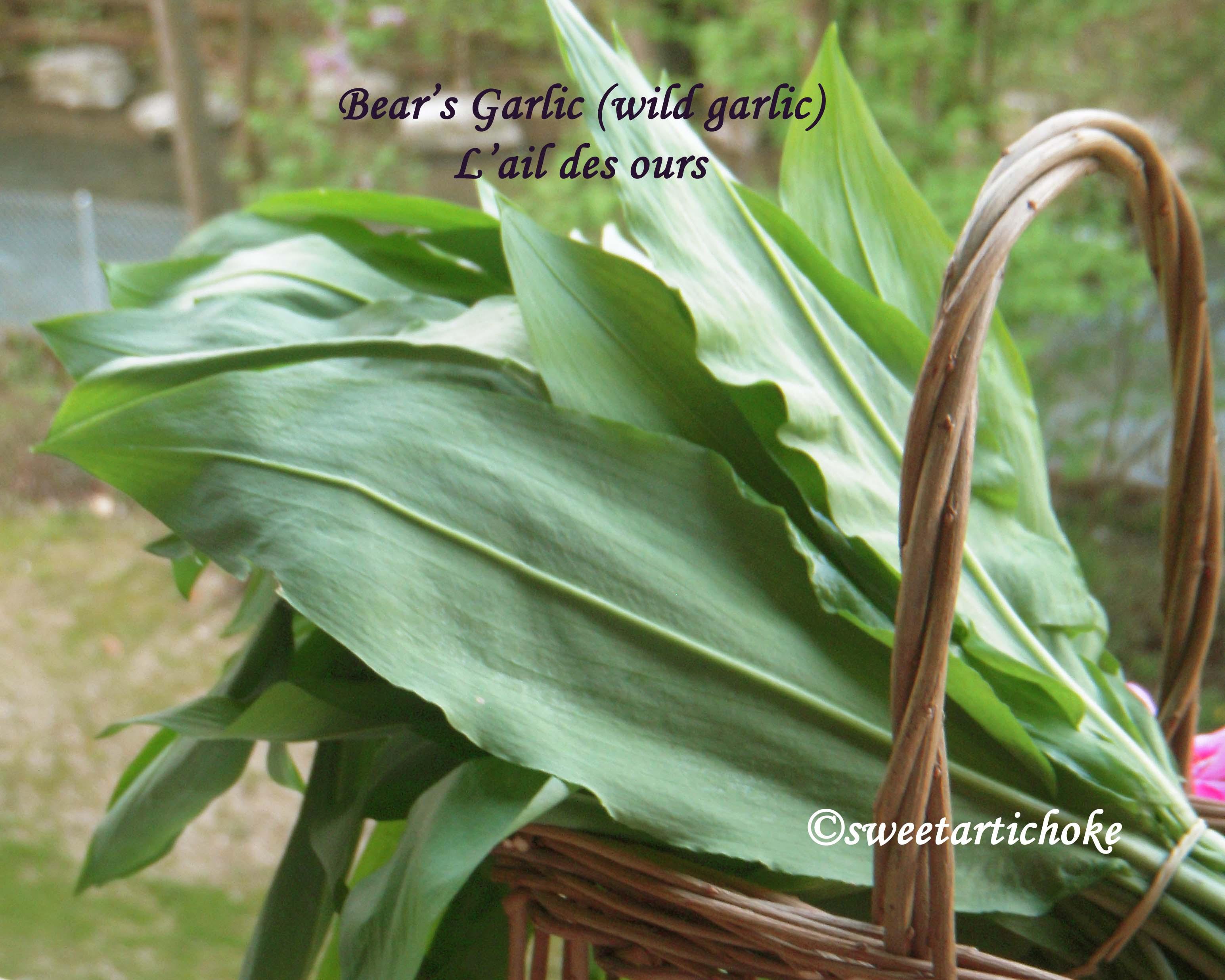 Dal with bear s garlic dal l ail des ours lentilles - L ail des ours ...